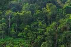 bakgrundsskog Fotografering för Bildbyråer