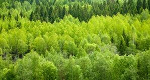 bakgrundsskog Royaltyfri Bild
