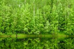 bakgrundsskog Arkivbilder