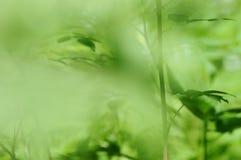bakgrundsskog Arkivfoton