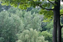 bakgrundsskog Royaltyfri Fotografi