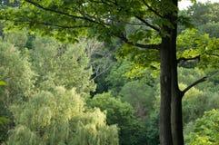 bakgrundsskog Arkivfoto