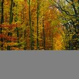 bakgrundsskog för 04 höst Arkivbilder
