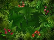 bakgrundsskognatt Arkivbild