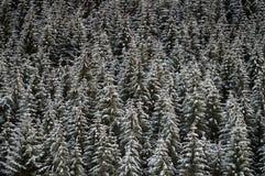bakgrundsskogvinter Royaltyfria Bilder