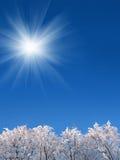 bakgrundssky under vinterträn arkivfoto