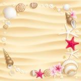 bakgrundssnäckskal Royaltyfri Fotografi