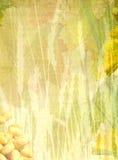 bakgrundssommar Royaltyfri Bild