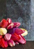 Bakgrundsstilleben av nya tulpanblommor Fotografering för Bildbyråer