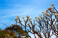 bakgrundsstrålar stänger att avverka upp treen Arkivfoto