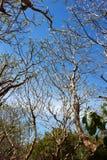 bakgrundsstrålar stänger att avverka upp treen Fotografering för Bildbyråer