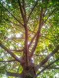 bakgrundsstrålar stänger att avverka upp treen Arkivfoton