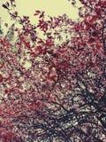 bakgrundsstrålar stänger att avverka upp treen Royaltyfri Foto