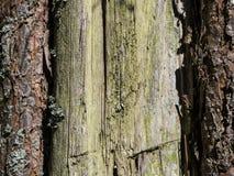 bakgrundsstrålar stänger att avverka upp treen royaltyfri bild