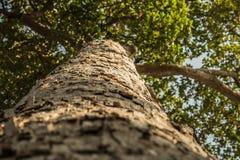 bakgrundsstrålar stänger att avverka upp treen Arkivbilder