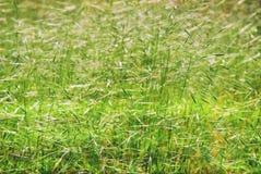 Bakgrundstapetgräsplan fotografering för bildbyråer
