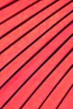 Bakgrundstextur av den japanska röda slags solskydd Arkivbild