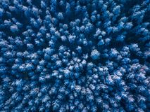 Bakgrundstextur av en djupfryst skog på vintern, antennskott royaltyfri bild