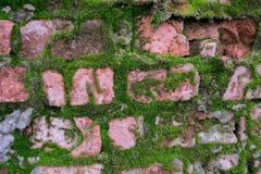 Bakgrundstextur av en gammal röd tegelsten som täckas med grön mossa Royaltyfria Foton