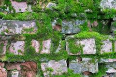 Bakgrundstextur av en gammal röd tegelsten som täckas med grön mossa Royaltyfri Fotografi