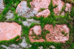Bakgrundstextur av en gammal röd tegelsten som täckas med grön mossa Fotografering för Bildbyråer