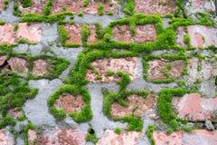 Bakgrundstextur av en gammal röd tegelsten som täckas med grön mossa Royaltyfria Bilder