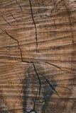 Bakgrundstextur av ett avverkat tr?d kn?ckte band och fl?ckar arkivfoton