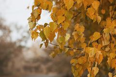 Bakgrundstextur av guling lämnar Autumn Leaf Background Arkivbilder
