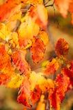 Bakgrundstextur av guling lämnar Autumn Leaf Background skrän Royaltyfri Bild