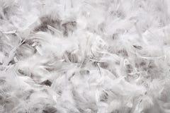 Bakgrundstextur av mjuk vit befjädrar ner Royaltyfria Bilder