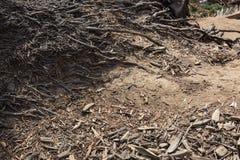 Bakgrundstextur av smuts, ris och den fintrådiga palmträdet rotar i neutrala signaler Royaltyfri Fotografi