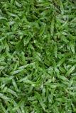Bakgrundstextur för grönt gräs Arkivfoto