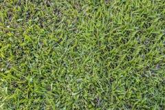 Bakgrundstextur för grönt gräs Arkivfoton