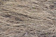 Bakgrundstextur för torrt gräs, förra året slåtter arkivfoton