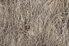 Bakgrundstextur för torrt gräs, hö som är gammalt, förra året, slåtter royaltyfri bild