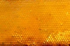 Bakgrundstextur och modellen av ett avsnitt av vaxhonungskakan från en bibikupa fyllde med guld- honung Fotografering för Bildbyråer