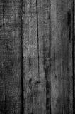 bakgrundstexturträ Royaltyfri Bild
