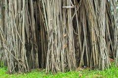 Bakgrundsträdet rotar Fotografering för Bildbyråer