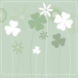 bakgrundsväxt av släkten Trifolium Arkivbilder