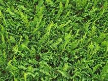 bakgrundsväxter Fotografering för Bildbyråer