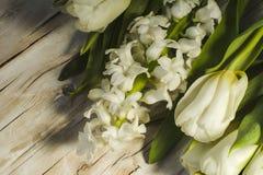 Bakgrundsvåren blommar - vita tulpan och hyacinter Royaltyfri Fotografi