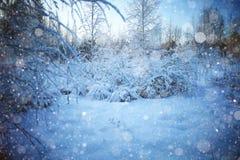 Bakgrundsvinter i skog Arkivbild