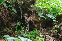 Bakgrundsyttersida av den gamla trädstammen som omges av ormbunkar och cli royaltyfri foto