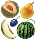 Bakhcha della pianta della zucca della prugna del melone dell'anguria della pera Fotografia Stock Libera da Diritti