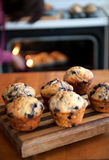 Baking blueberry muffins Stock Photography