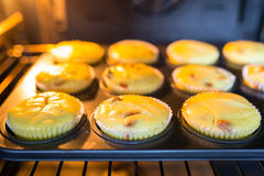 Baking cheesecake muffins Stock Photography