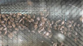 Baking coffee bean. In the coffee roaster stock footage