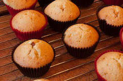 Baking cupcake, muffins on Oven-tray close up. Delicious baking chocolate cupcake, baking chocolate muffins stock photo