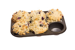 Baking pan with group of blueberry muffins Royalty Free Stock Images