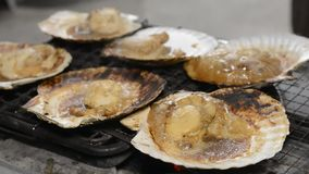 Baking scallops stock video footage